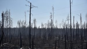 In Ukraine, forest fires approach radioactive waste storage facilities