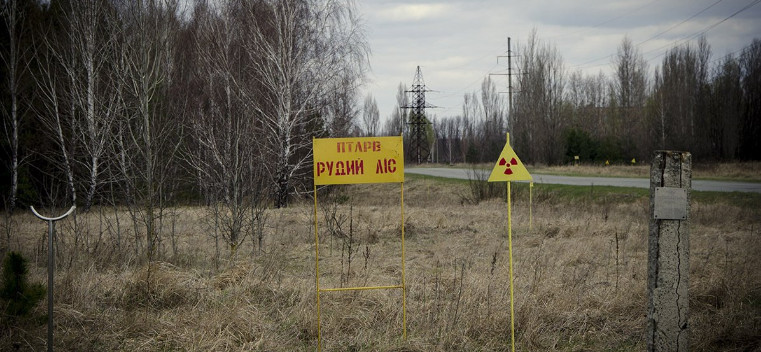 Kiev put up for sale the Chernobyl radioactive forest