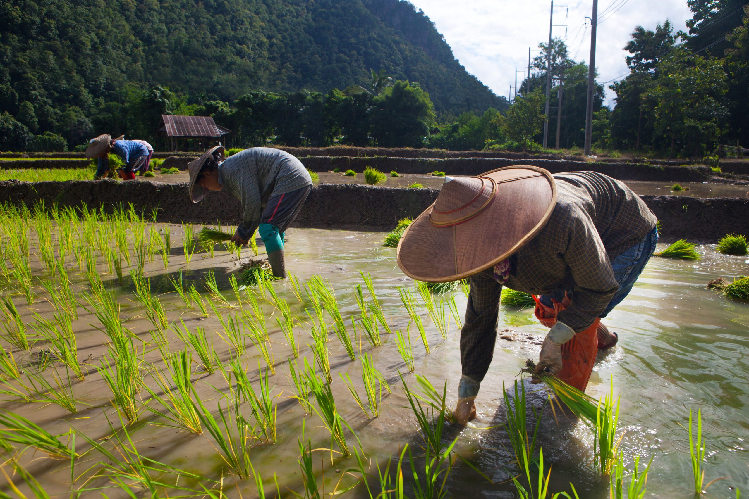 South Korea to refund UN funds allocated for humanitarian rice supplies to DPRK