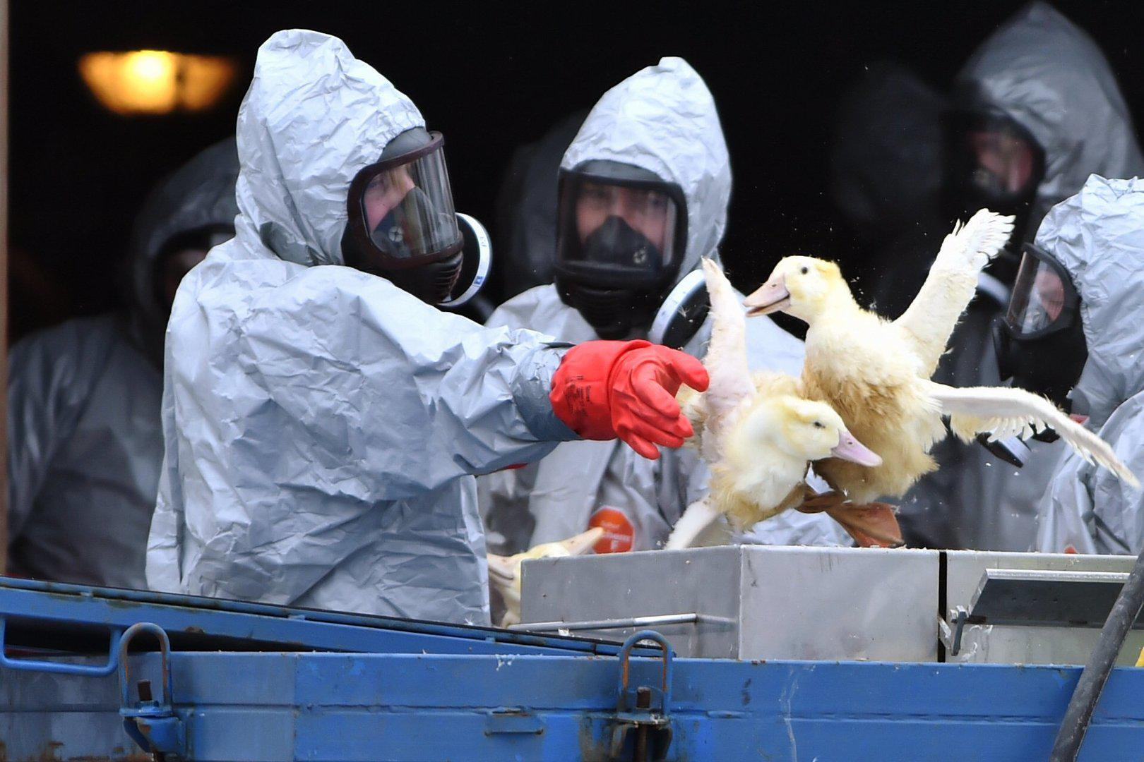 Several states of India have recorded a massive outbreak of bird flu