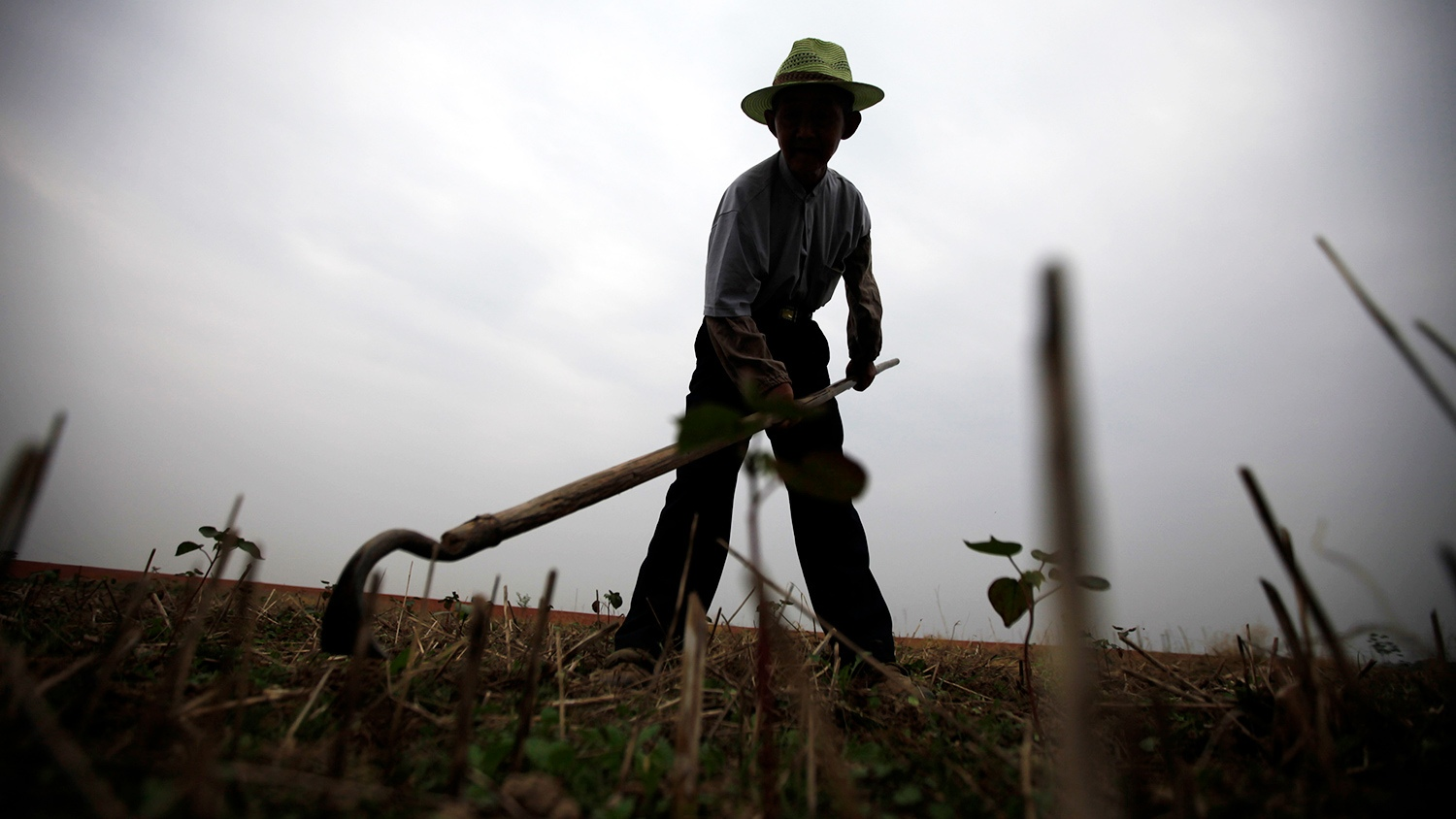 Cotton scandal: there will definitely be a war between China and U.S.